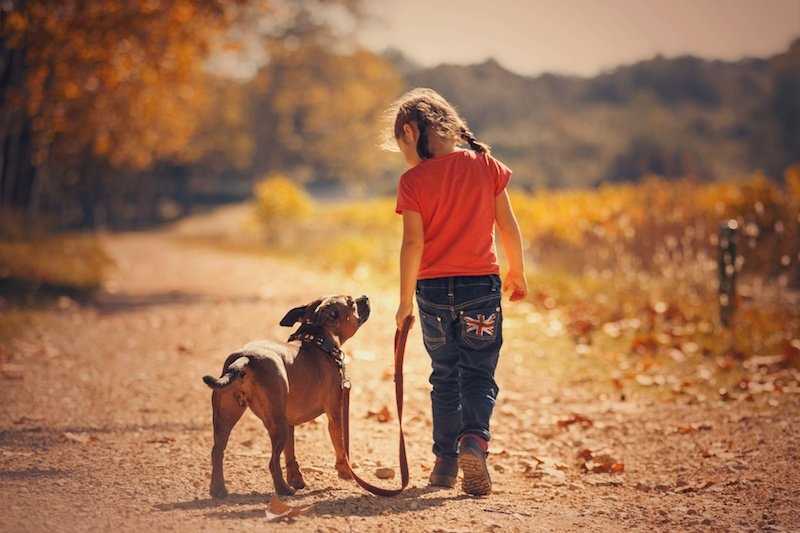 Early life exposure to dogs may lessen risk of developing schizophrenia
