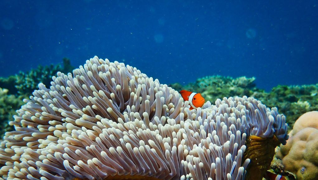 Sounds of the past give new hope for coral reef restoration scaled