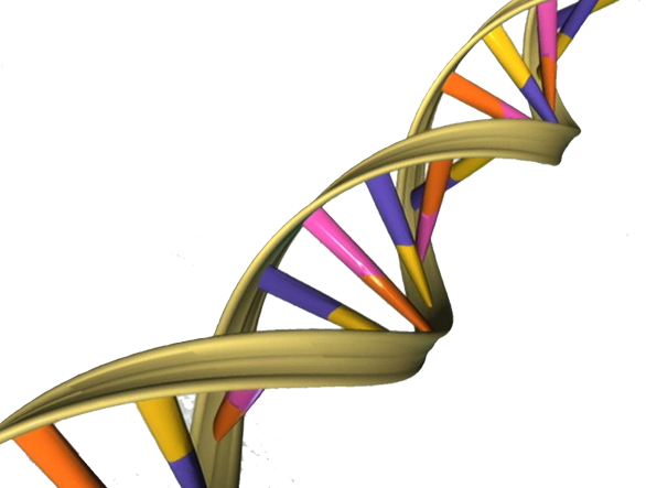 Study reveals a role for jumping genes during times of stress