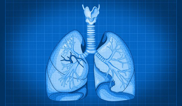 With cellular blueprint for lungs researchers look ahead to organ regeneration