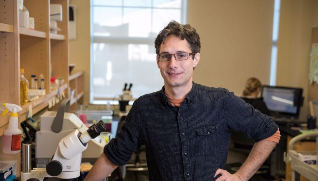 Biologists identify pathways that extend lifespan by 500