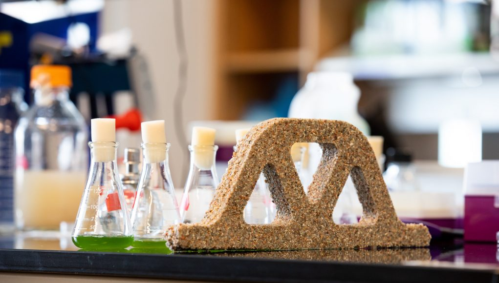 Building materials come alive with help from bacteria scaled