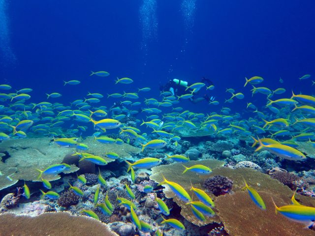 Earths most biodiverse ecosystems face a perfect storm scaled