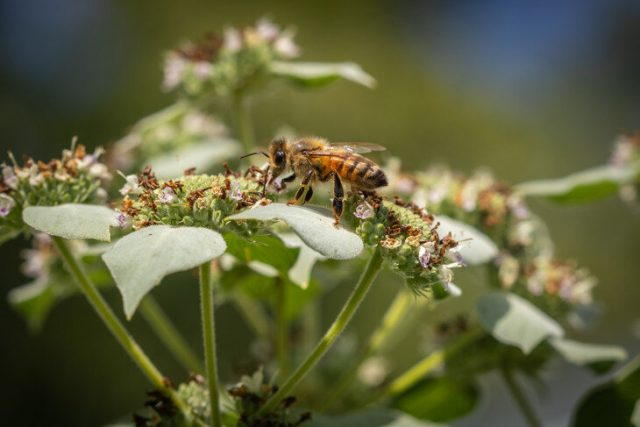 Insecticides becoming more toxic to honey bees