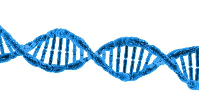 Jumping genes help stabilize DNA folding patterns