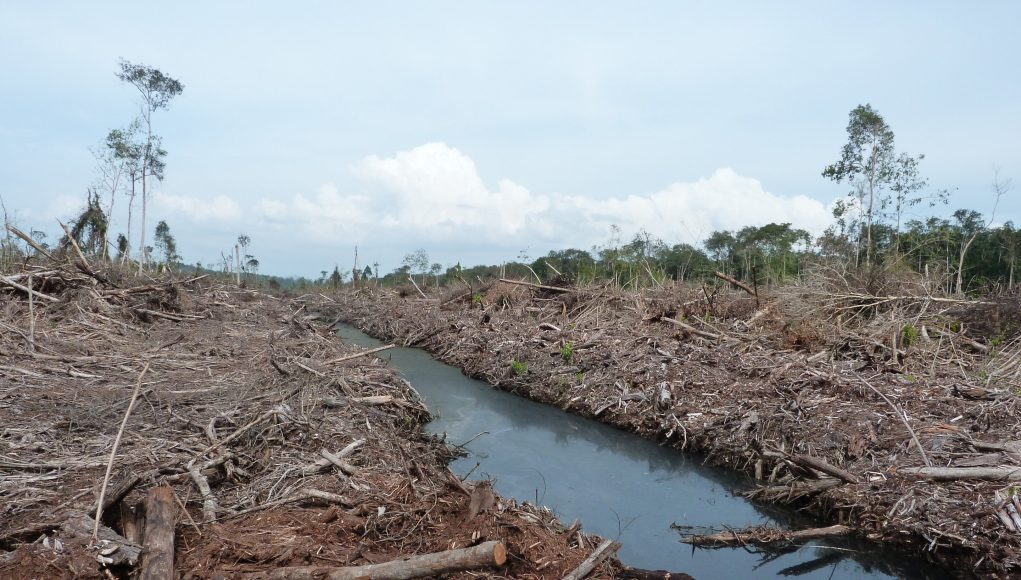 Preparing land for palm oil causes most climate damage scaled