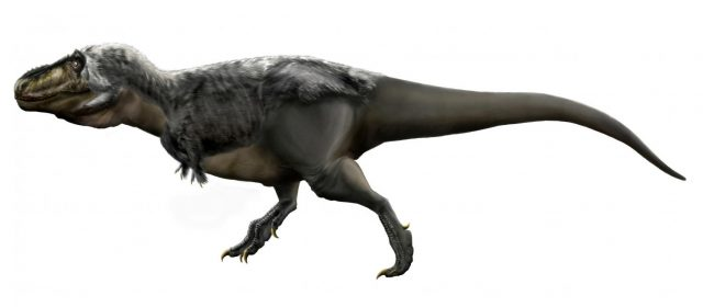 Researchers learn more about teen age T.Rex