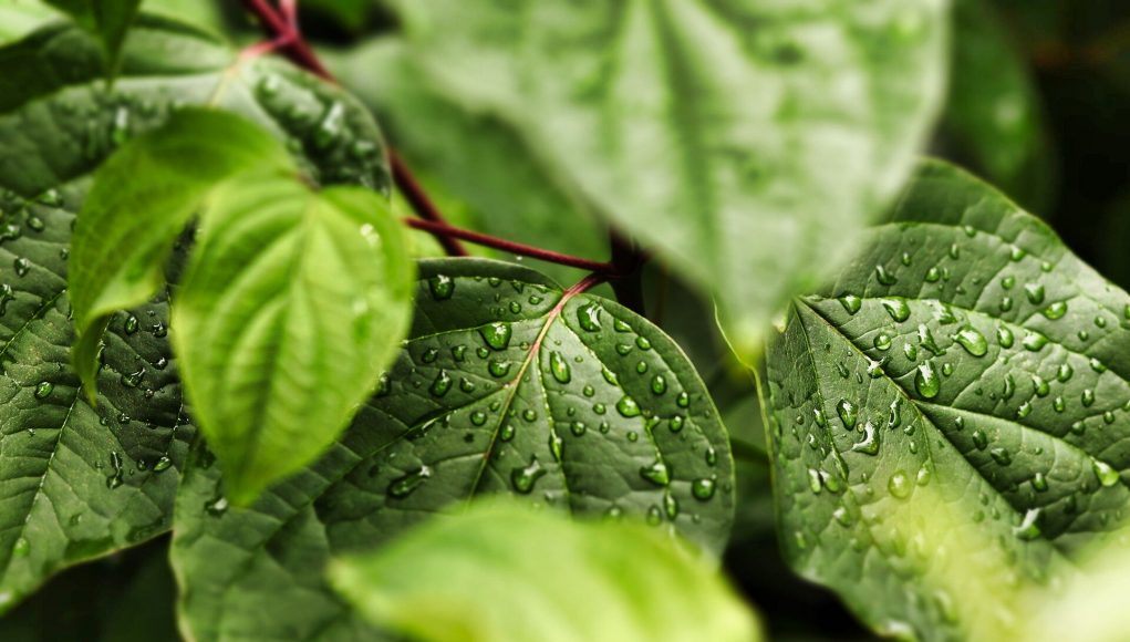 Scientists uncover how an explosion of new genes explain the origin of land plants