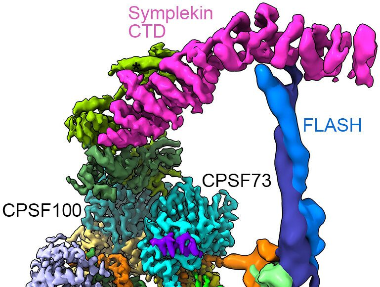 Key molecular machine in cells pictured in detail for the first time
