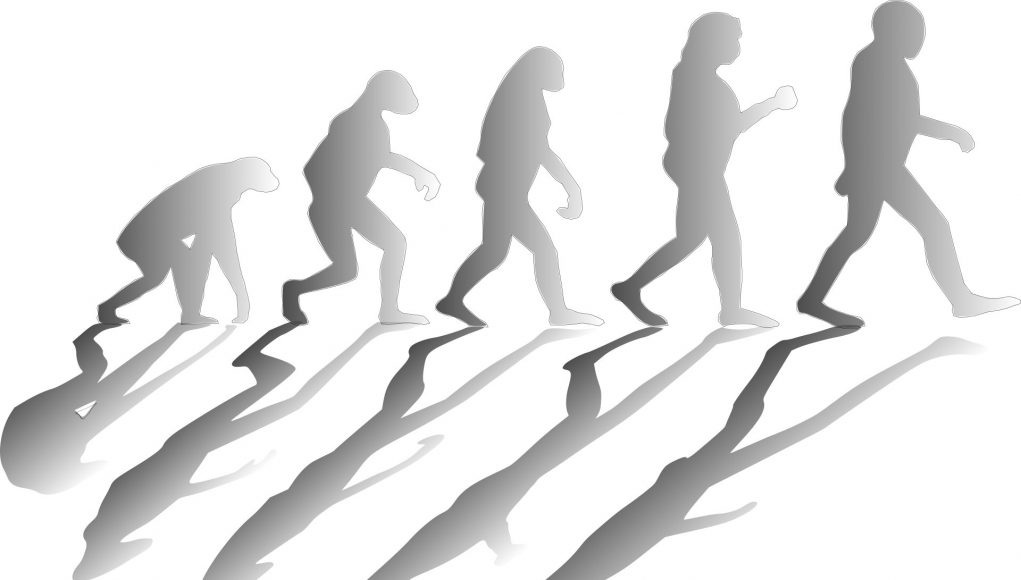 New mathematical model reveals how major groups arise in evolution