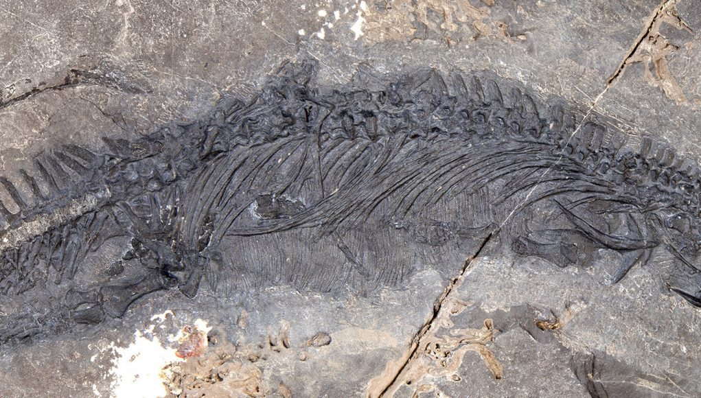 New thalattosaur species discovered in Southeast Alaska scaled