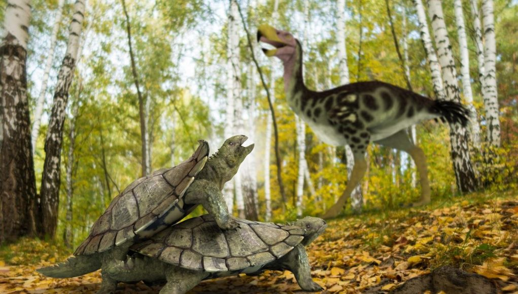 One single primitive turtle resisted mass extinction in the northern hemisphere