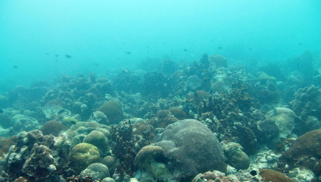 Researchers find new method to allow corals to rapidly respond to climate change