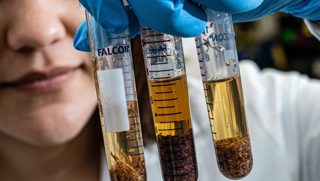 Scientists learn how plants manipulate their soil environment to assure a cheap steady supply of nutrients scaled