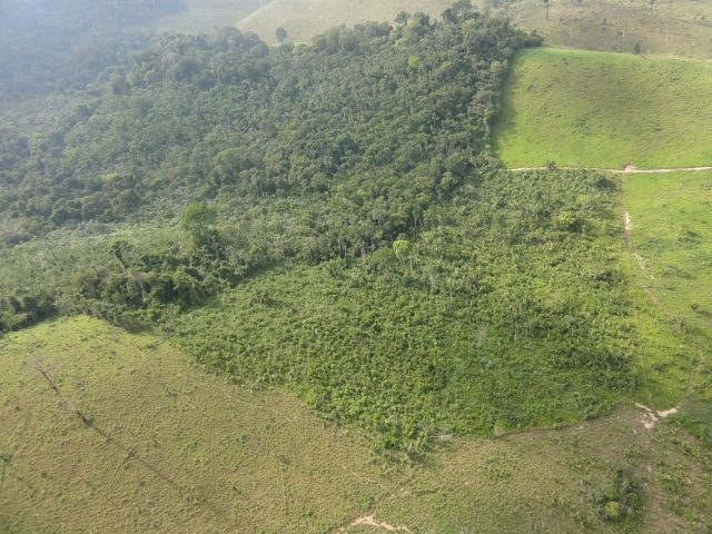 Secondary forests provide deforestation buffer for old growth primary forests scaled