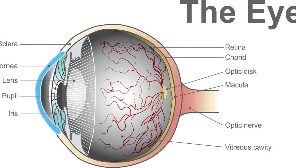 A device for the early detection of certain eyesight problems scaled