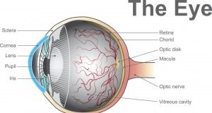 A device for the early detection of certain eyesight problems