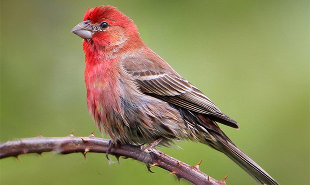 Big brains or many babies How birds can thrive in urban environments
