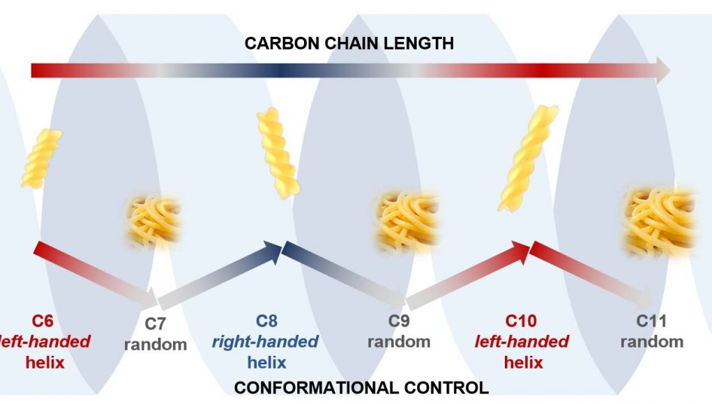 Carbon chains adopt fusilli or spaghetti shapes if they have odd or even numbers
