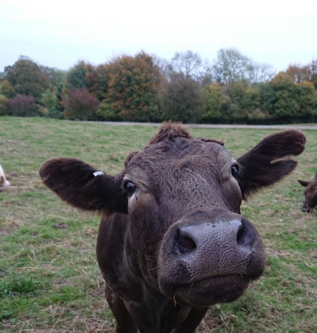 Common anti parasite treatments used on cattle have devastating impacts on wildlife scaled