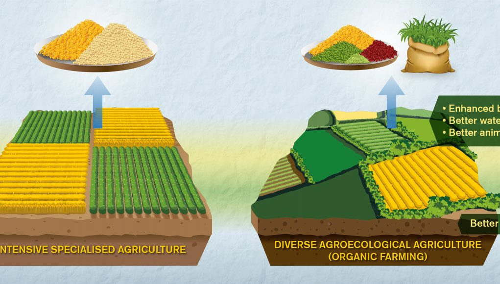 Comparisons of organic and conventional agriculture need improvement say researchers scaled