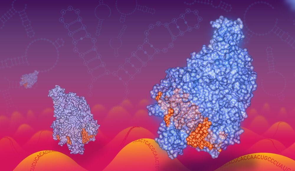 New kind of CRISPR technology to target RNA including RNA viruses like coronavirus 2