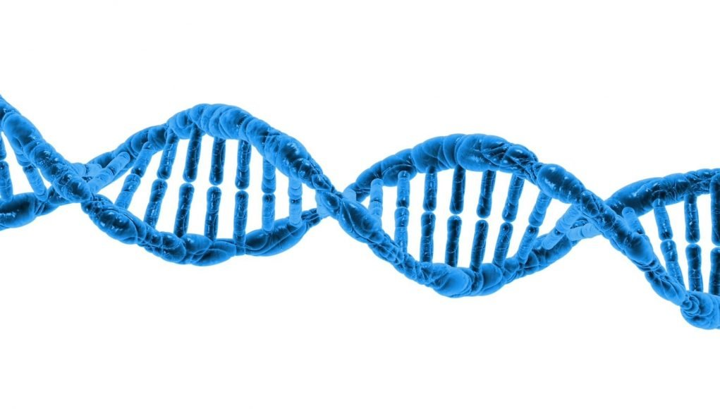 Scientists reveal how proteins team up to repair DNA