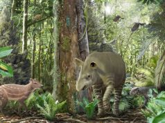 Small horses got smaller big tapirs got bigger 47 million years ago