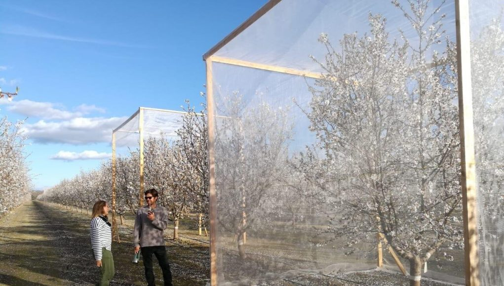 To bee or not to bee a question for almond growers