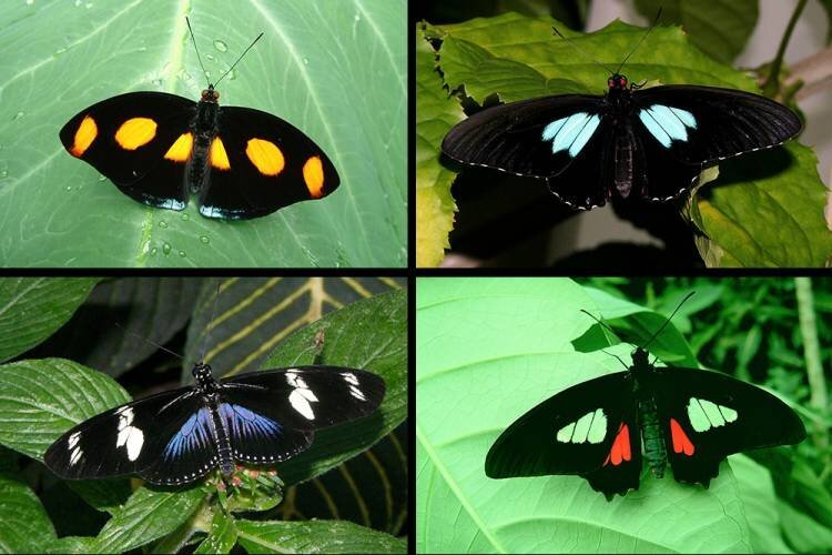To make ultra black materials that wont weigh things down consider the butterfly