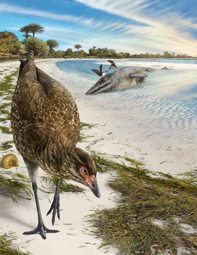 Wonderchicken fossil from the age of dinosaurs reveals origin of modern birds scaled