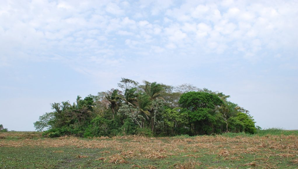 Amazonian crops domesticated 10000 years ago scaled
