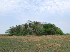 Amazonian crops domesticated 10000 years ago