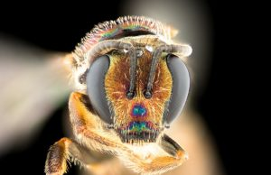 Bees point to new evolutionary answers