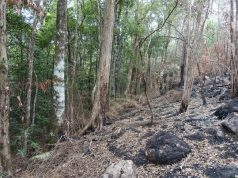 Bushfires damaged Australian rainforest that is home to Earths only living specimens of ancient species