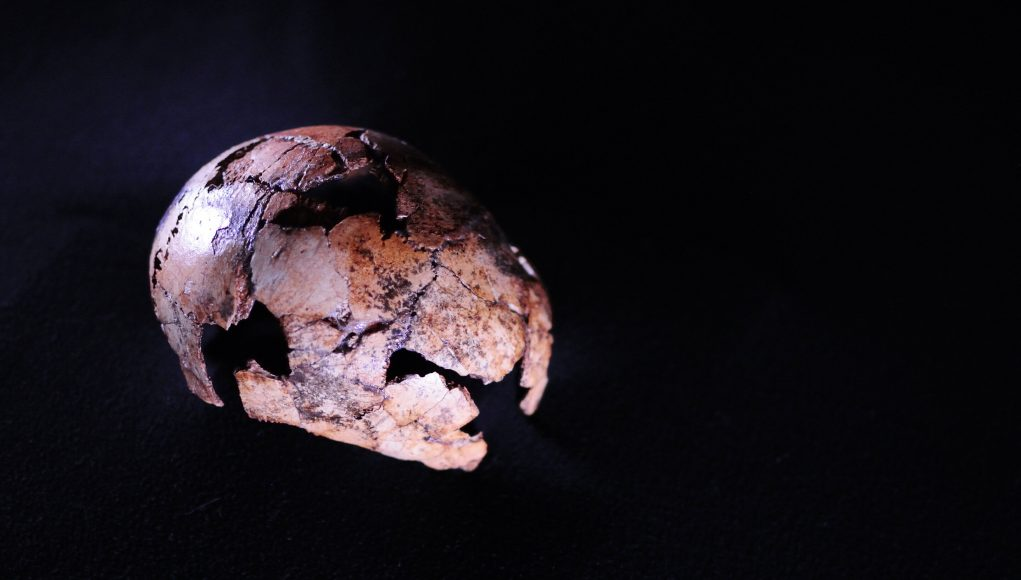Direct human ancestor Homo erectus is older than we thought scaled