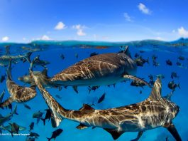 Landmark study concludes marine life can be rebuilt by 2050