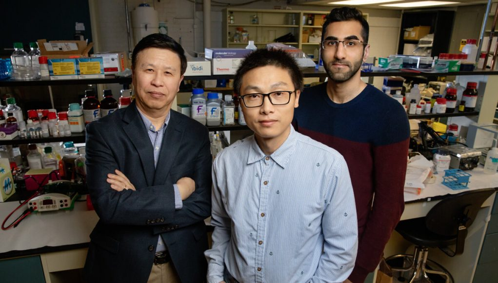 Physical force alone spurs gene expression study reveals