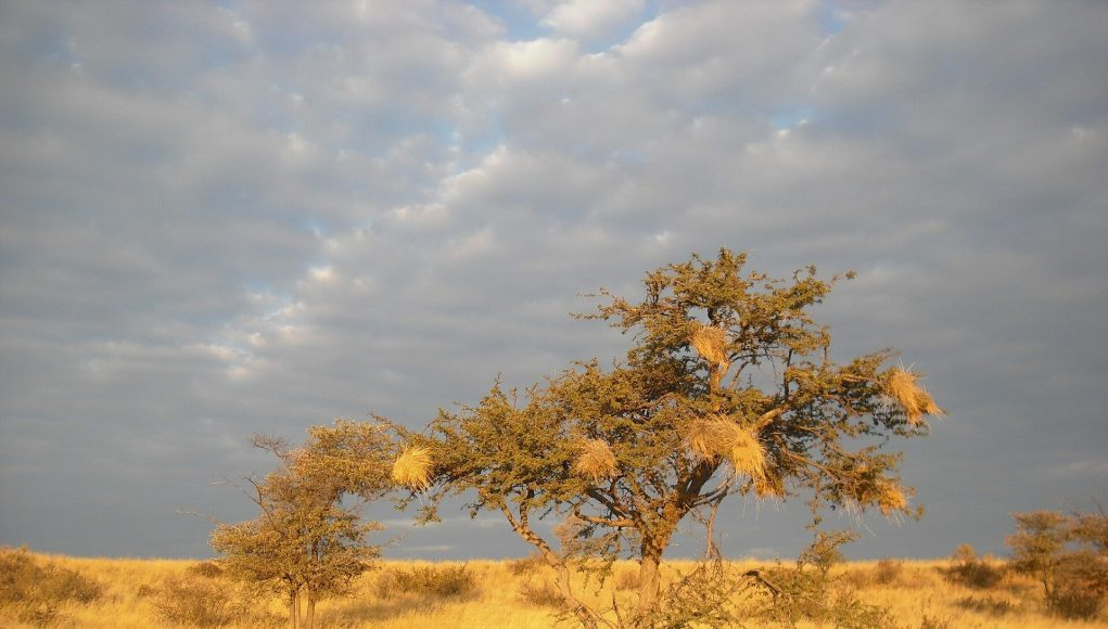 Precipitation will be essential for plants to counteract global warming