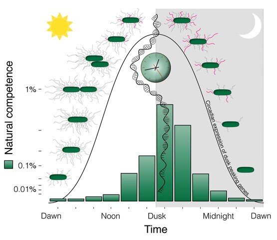 Researchers uncover importance of aligning biological clock with day night cycles