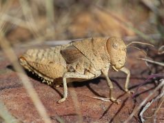 Scientists warning to humanity on insect extinctions