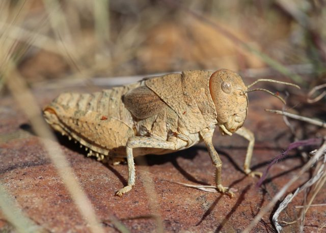 Scientists warning to humanity on insect extinctions scaled