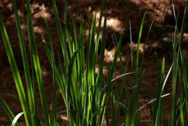 Study identifies new temperature sensing mechanism in plants
