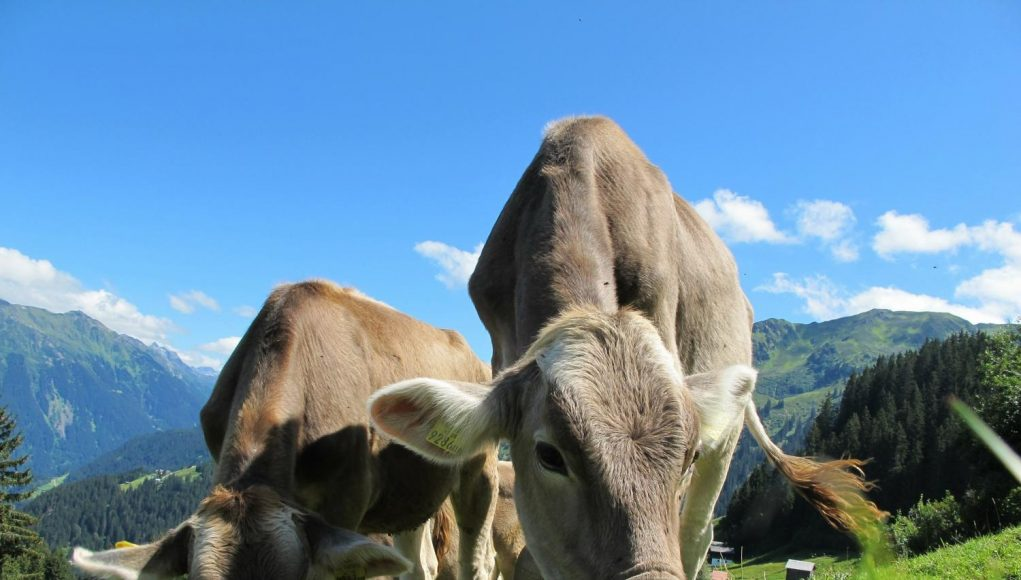 Study traces spread of early dairy farming across Western Europe