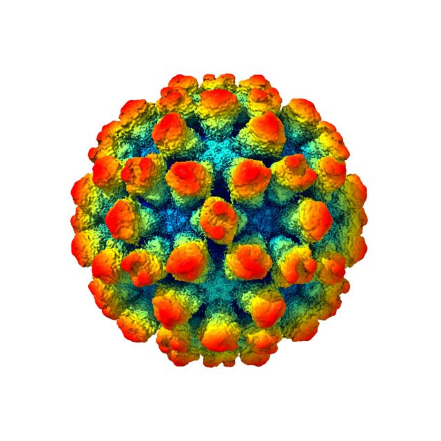 The architecture of a shape shifting norovirus