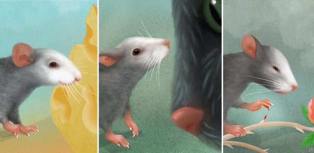The face of a mouse reveals its emotions