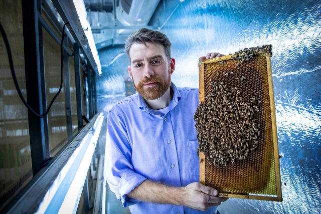 Virus infected honey bees more likely to gain entrance to healthy hives