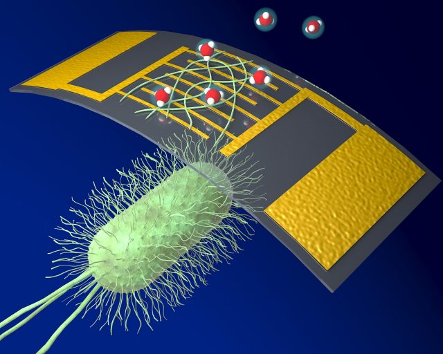 A new highly sensitive chemical sensor uses protein nanowires