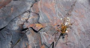 Ancient rocks show high oxygen levels on Earth two billion years ago