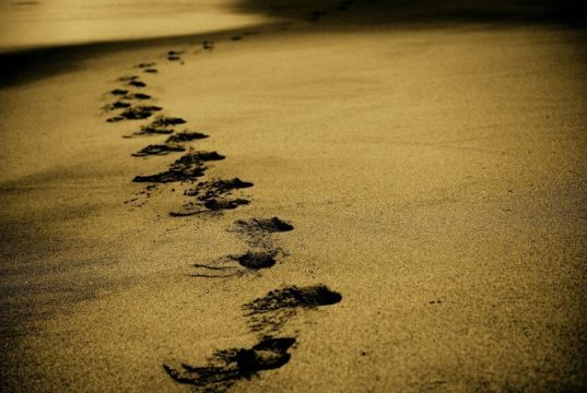 Archaeology Fossilized footprints suggest ancient humans divided labor